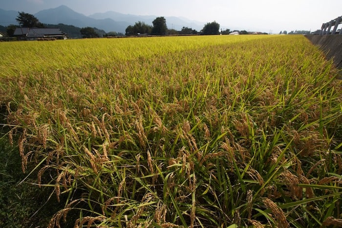 Japanese Rice Whisky Should Be Approached With Curiosity
