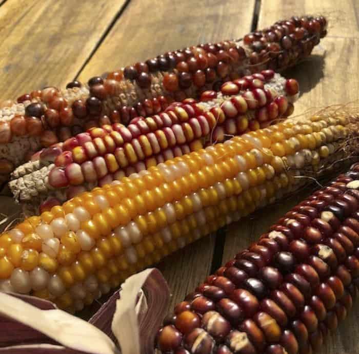 Buffalo Trace 2020 corn