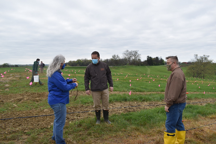 Laura DeWald (L) instructs Master Distller Harlen Wheatley (C) and Warehouse Manager Patrick Clouse (R) from Buffalo Trace how to plant seedlings